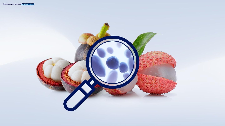 Image de la souche unique de levure probiotique Saccharomyces boulardii CNCM I-745 et des fruits tropicaux (litchi et mangoustan) à partir desquels elle a été isolée.