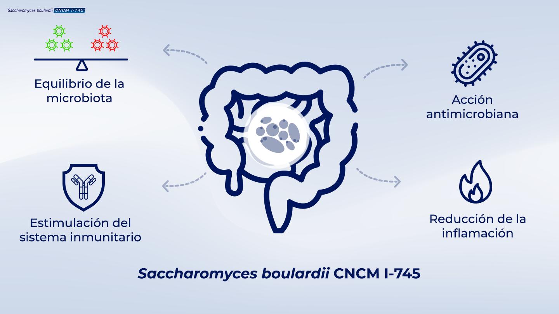 image https://www.saccharomycesboulardii.com/wp-content/uploads/2020/09/014_Single-strainarticle-2_2-5-150x150.png
